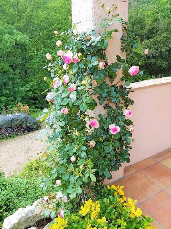 Jardin de la maison de vacances SINE TEMPORE VENCE